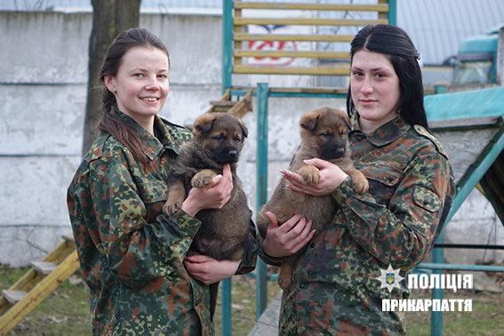 В Івано-Франківську стартує школа «Юного кінолога» (ПРОГРАМА)