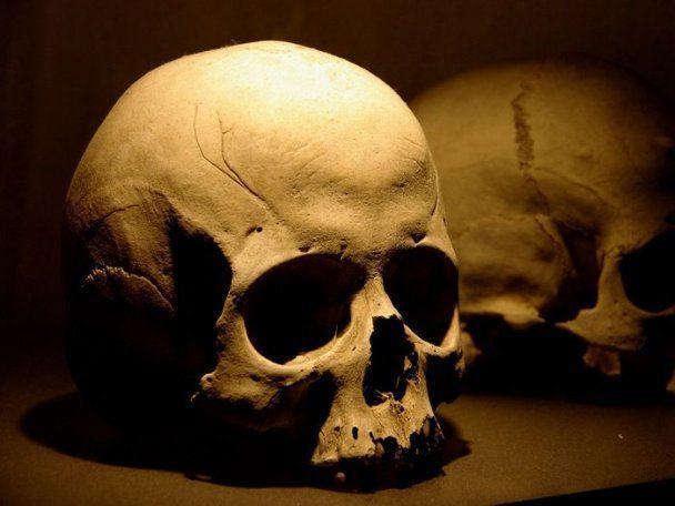 В одному з франківських дворів знайшли людський череп