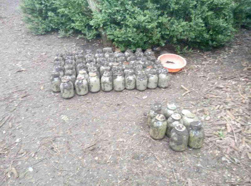 Правоохоронці розшукали прикарпатця, який у саду закопав понад 200 кілограмів марихуани