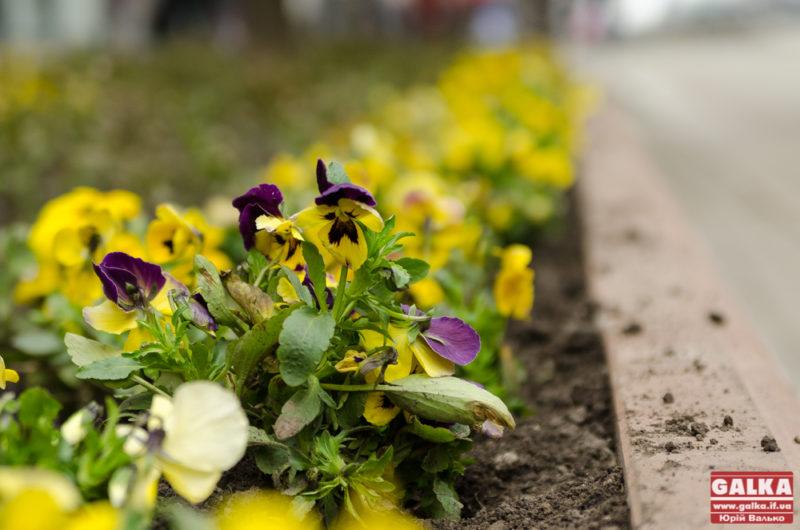 Місто купить квітів і листівок на майже 72 тисячі гривень