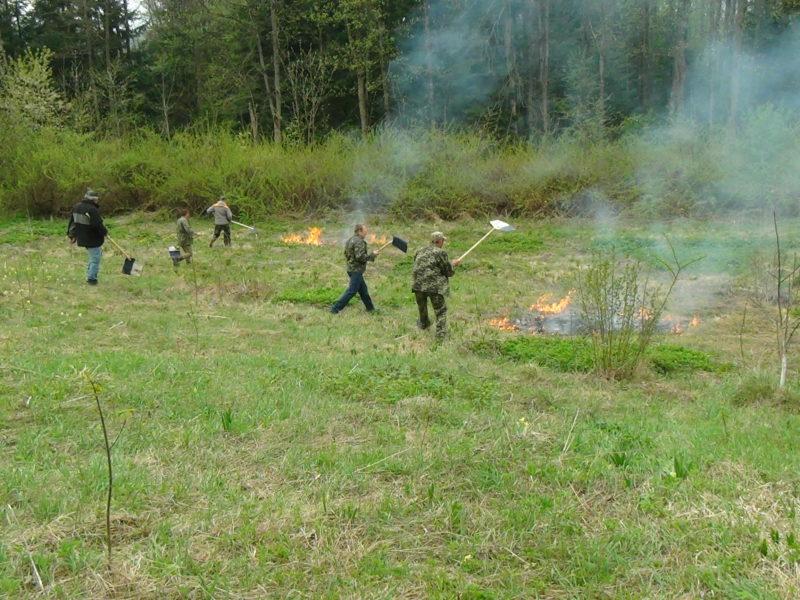Лісники та рятувальники разом гасили пожежу у лісі (ФОТОФАКТ)