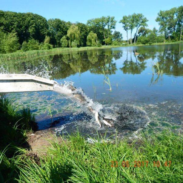 У міське озеро запустили 430 кілограмів риби (ФОТО)