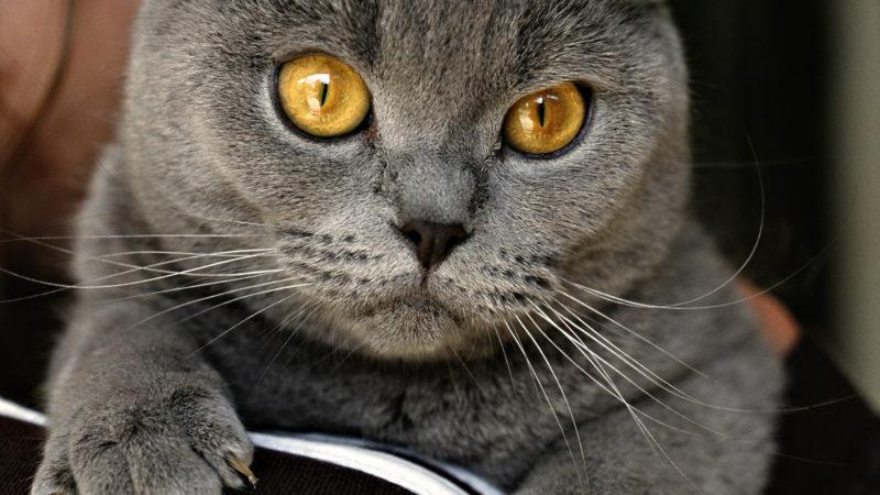 МАРСіани показали, як три години рятували кота з вентиляційної шахти (ВІДЕО)