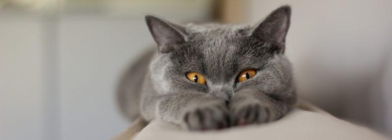 Галка рекомендує: 5 причин завести кота