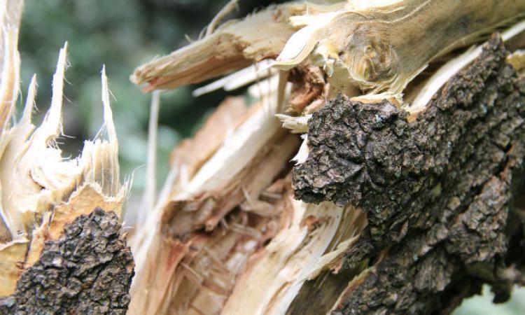 У Польщі буревій знищив кількадесят гектарів лісу (ВІДЕО)