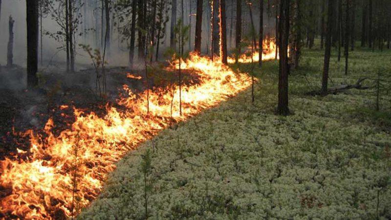 На Прикарпатті оголосили про найвищий ступінь пожежної небезпеки