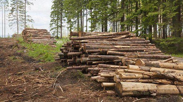 У Рогатинського лісгоспу відсудили мільйон 200 за незаконну рубку