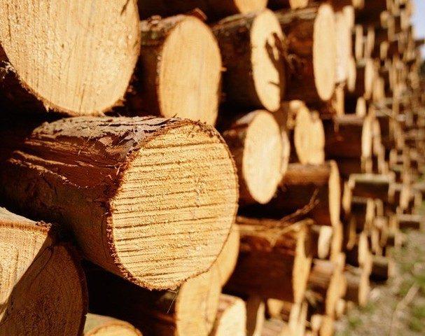 Івано-Франківщина – восьма в країні за обсягами продажу деревини