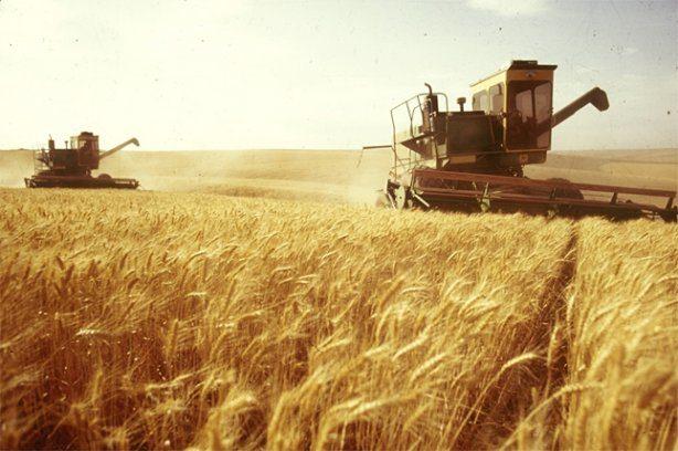 Відомо, у якому районі Прикарпаття найбільше фермерів