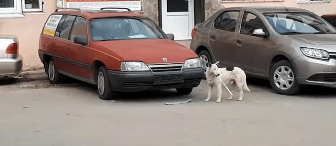 У Криму пес-диверсант відірвав від авто номерний знак Росії (ВІДЕО)