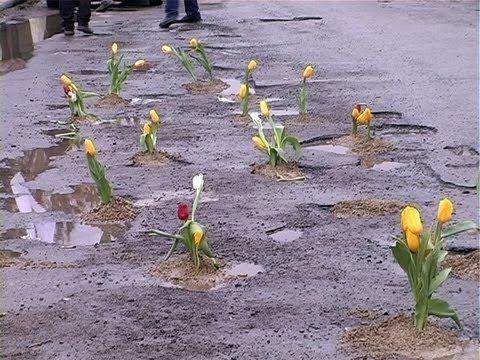 «Засади УкрАвтоДор». Франківські водії влаштовують квіткову акцію проти ям на дорогах