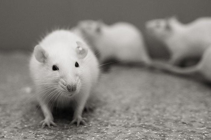 Франківські студенти вчилися проводити експерименти на лабораторних тваринах у Польщі
