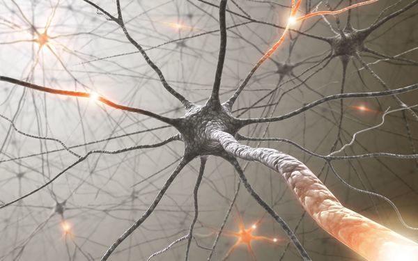 Вчені вперше провели пересадку пам'яті