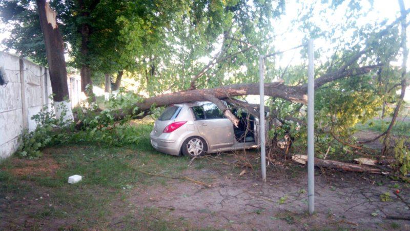 У машині, котру вчора під час негоди розчавило дерево, були люди (ФОТО)
