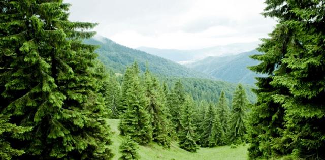 На Франківщині добу шукали закарпатку, яка заблукала у лісі