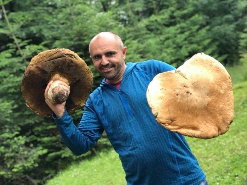 """У Карпатах почали """"косити"""" гриби-велетні (ФОТО)"""
