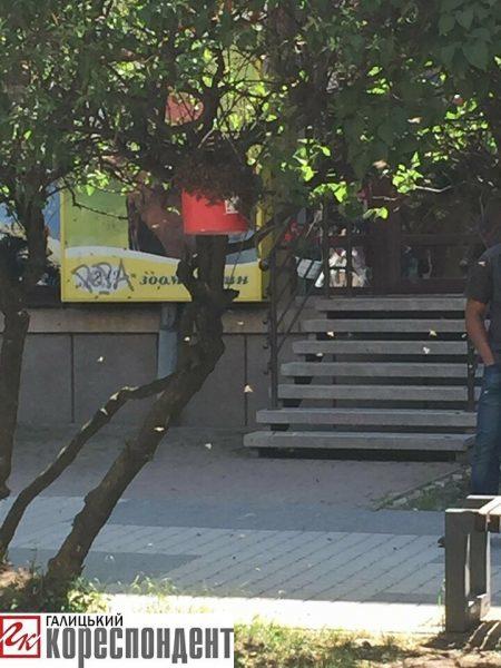 У центрі Франківська рятувальники ловлять рій бджіл (ФОТО)