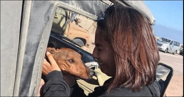 В Чилі пес випав із літака і майже тиждень блукав пустелею