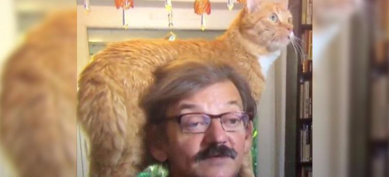 Кіт увірвався в політичне інтерв'ю і став зіркою Інтернету (ВІДЕО)