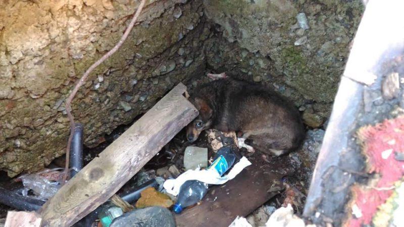 У Надвірній визволили собаку, котра рік жила у пастці під землею (ФОТО, ВІДЕО)