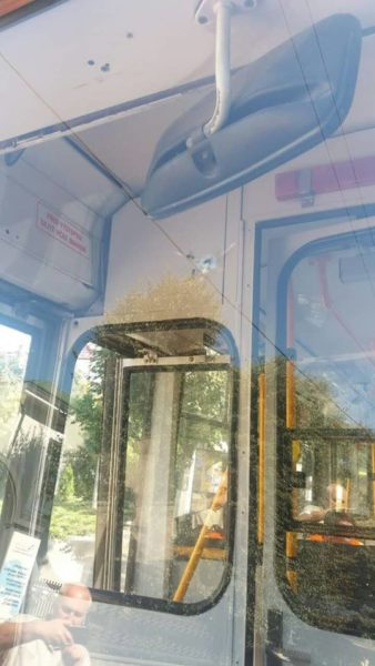 У центрі Франківська невідомий обстріляв тролейбус (ФОТОФАКТ)