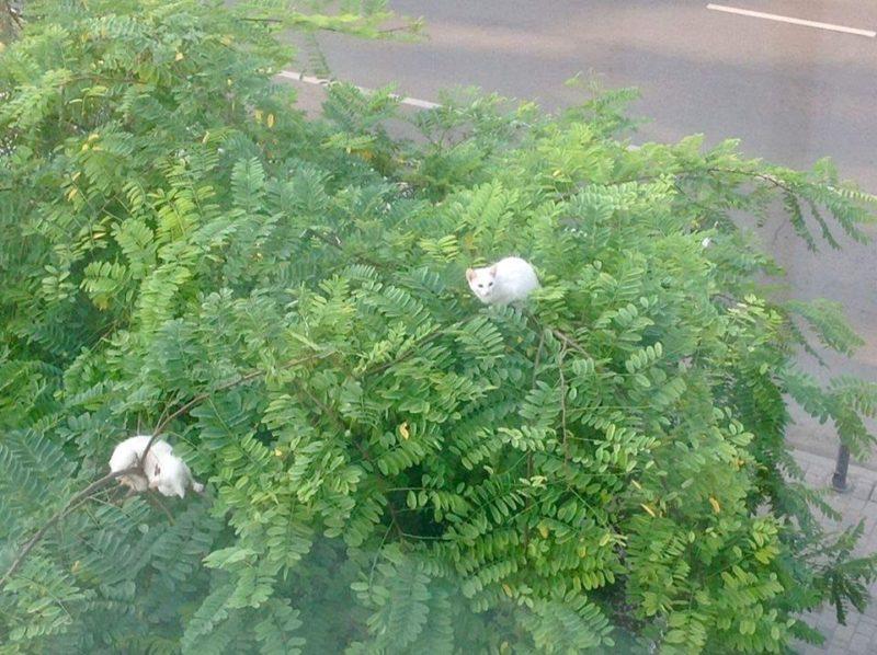 Франківські рятувальники допомогли зняти з дерева двох кошенят (ФОТО)