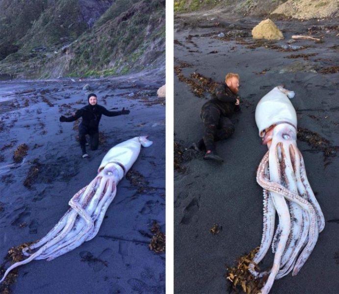 У Новій Зеландії знайшли чотириметрового кальмара (ФОТО)