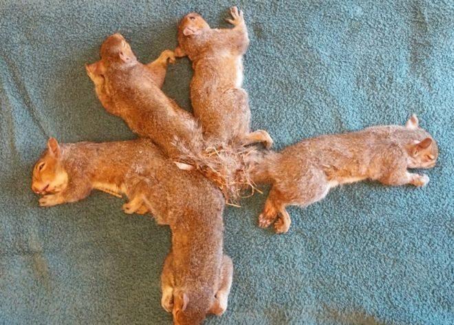 У США врятували п'ятьох білок, які заплуталися хвостами (ФОТО)