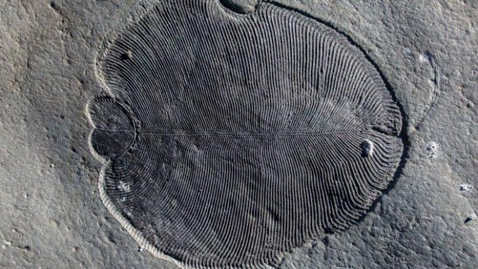 Вчені знайшли рештки найдавнішої тварини у світі (ВІДЕО)