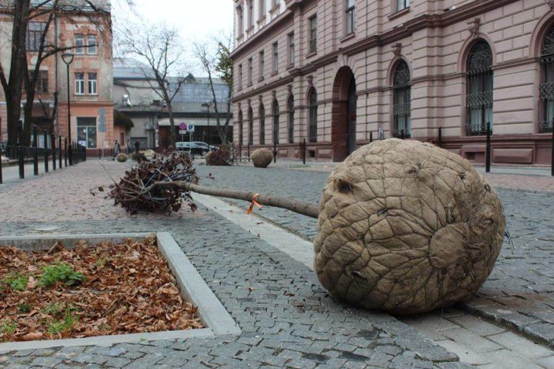 У Франківську продовжують озеленювати площу Міцкевича та вулицю Лесі Українки (ФОТО)