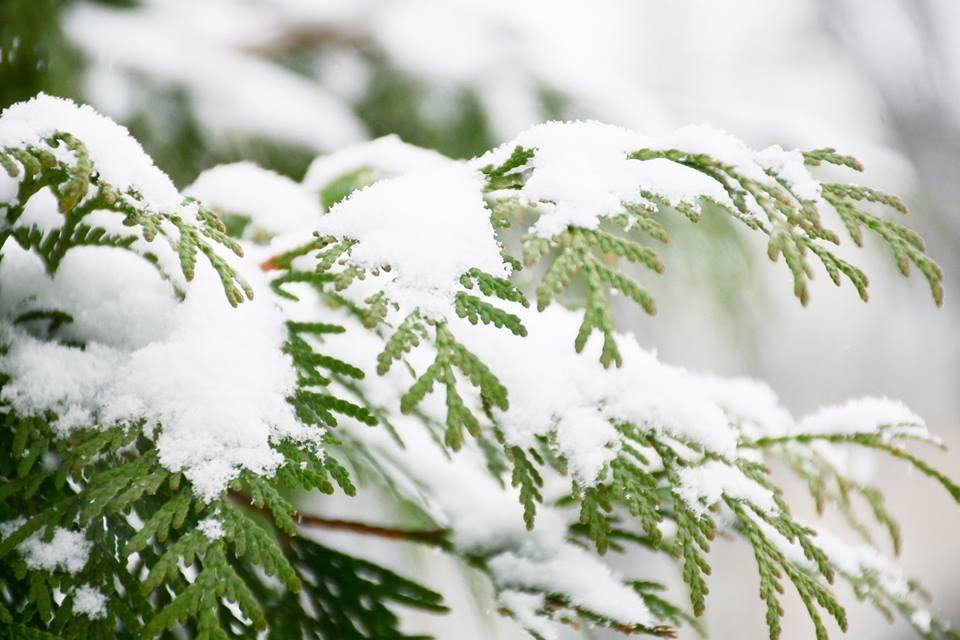 Галка рекомендує: як уникнути обмороження взимку