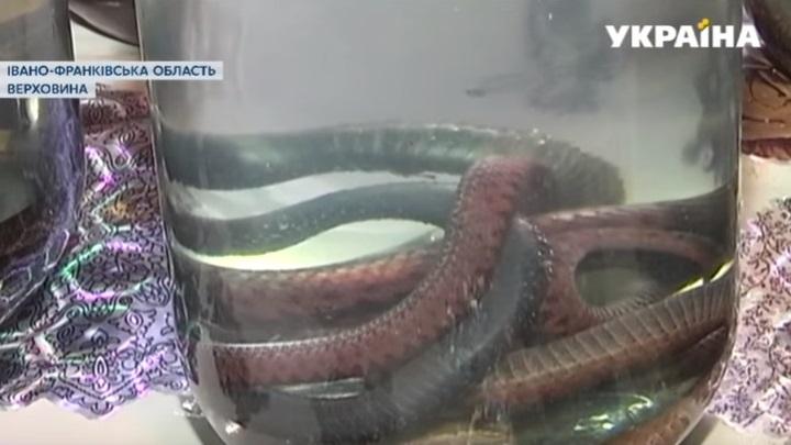 Жителька Франківщини лікує настоянками з плазунів та мухоморів (ВІДЕО)